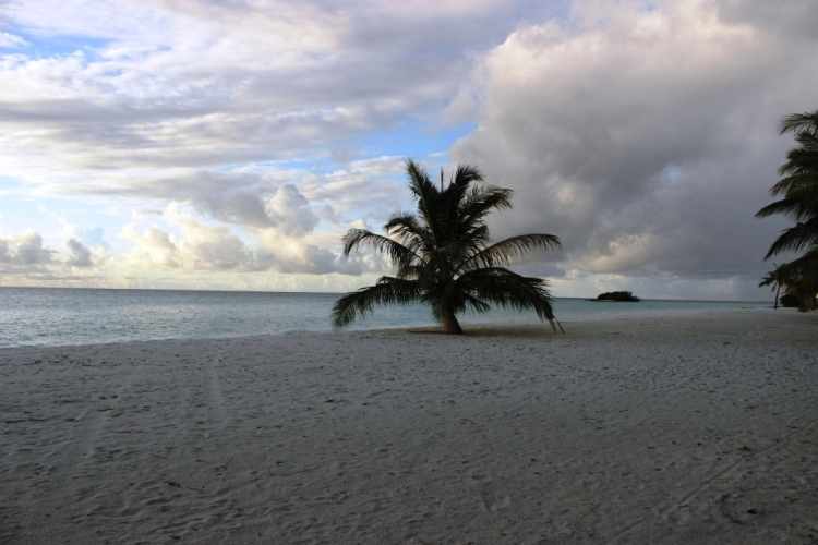Lonely coconut tree at the beach