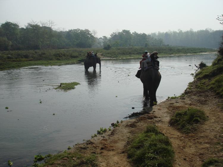 The Elephant Safari at Chitwan National Park